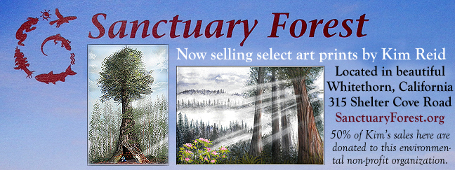 Sanctuary Forest Gift Gallery Shop Location