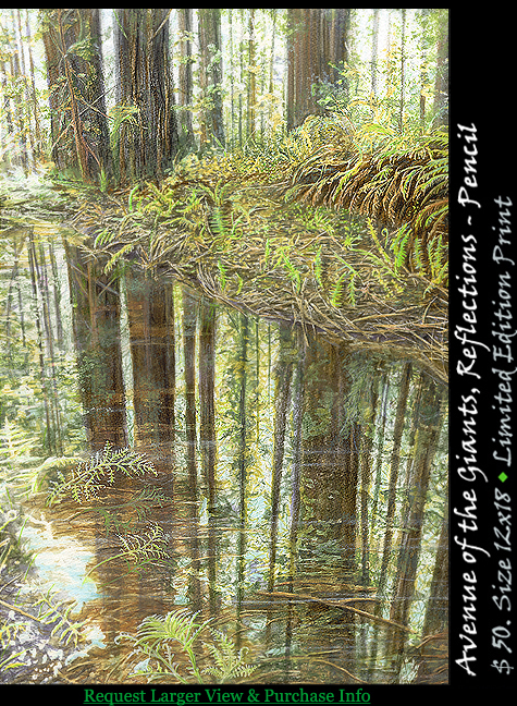 Avenue of the Giants - Reflections